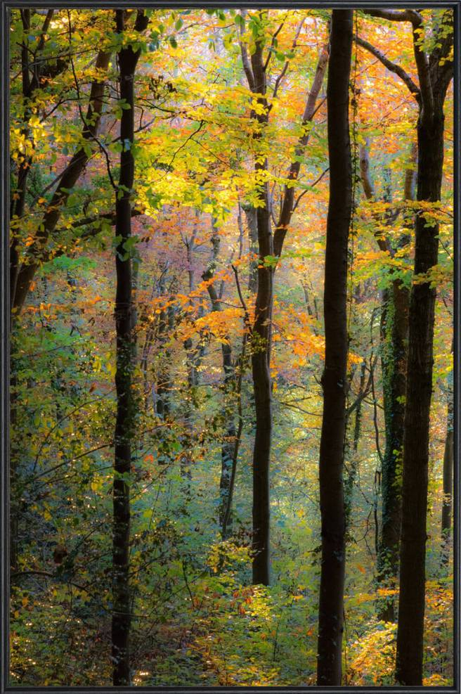 Mark Autumn Beech