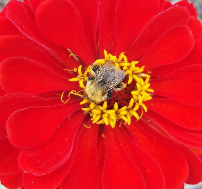 Bic Beaumont_Bee on Red_Photograph Reduced